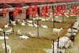 山东养羊场山东养羊场行情山东养羊基地