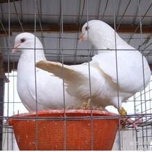 齐齐哈尔小鸵鸟多少钱/全国包邮图片