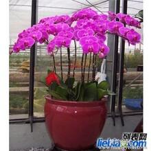 北京绿植公司、北京绿植租赁、北京绿植租摆服务公司