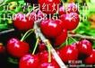 辽宁苗木供应山楂树苗板栗苗葡萄苗等各种果树苗木