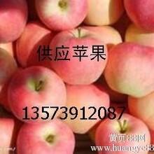 山东生姜价格图片