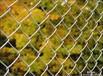 我勾花网厂生产优质勾花网护栏勾花网勾花网片安平县泽驰有限公司
