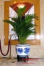 北京花卉绿植租摆