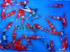 日本锦鲤九纹龙黑九纹龙推荐锦鲤观赏鱼批发
