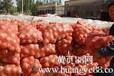 黄、红皮洋葱大量上市质量保障欢迎选购