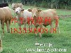 遵义市绥阳县哪里有卖进口多年生黑麦草种子的