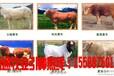 锦州特种刺猬养殖场