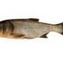 苏州鱼类配送水产品配送