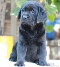 重庆哪里有卖宠物店的宠物狗狗价格宠物狗狗图片