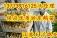 海南浙东大品种鹅苗哪里有卖的