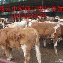 肉牛养殖效益分析