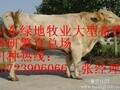 潮安县养殖肉牛若干问题图片