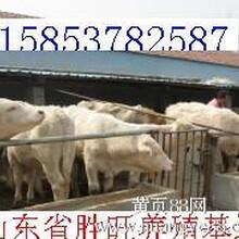 育肥牛养殖的基本措施