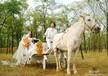 YC-B005/摄影马车婚礼马车英式马车情人摄影道具