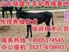 宁夏哪里有驴养殖厂