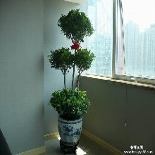 北京绿植租赁价格