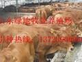 龙川县养殖肉牛若干问题图片