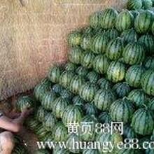 昌乐西瓜代办昌乐西瓜批发市场电话151537-15701老刘
