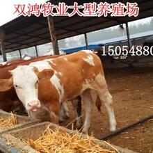 2014年肉牛犊的价格图片