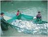 特种水产养殖甲鱼对虾鳗鱼桂鱼等EM菌的用法