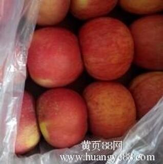 优质陕西红富士苹果价格,陕西膜袋红富士苹果基地图片3