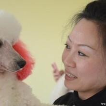 创业财富的首选——优缇多格宠物美容师培训学校