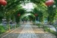 承揽园林设计园林工程园林规划园林绿化
