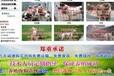 北京朝阳区肉狗苗