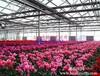 温室大棚图片_上海农程温室设备公司设计承建的温室大棚图片展示