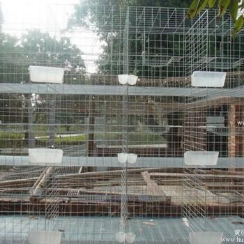 【加粗35斤鸽子笼子养殖鸽笼种鸽肉鸽笼3层12位鸽子笼_12位鸽笼子图片