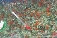 四川成都乐山市鱼池景观设计水净化水处理