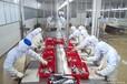 食品加工工人暴走日本工资高出签快