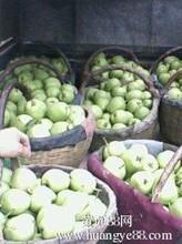 陕西苹果价格