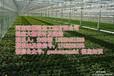 青海海东地区温室大棚建造/海北温室资材销售供应/青海温室-河南歌珊供应
