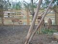 鹿的人工养殖方法和管里,梅花鹿产品功效及食用方法图片