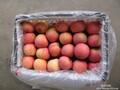 山东苹果批发价格产地苹果具体上市时间图片