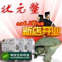 仿野生甲鱼王八特价活体状元鳖梅花农场前陇鳖三年0.8-1.2斤包邮