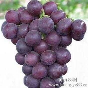供应套袋巨峰葡萄