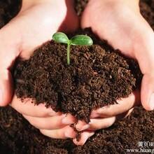 草炭土多少钱一斤,草炭土制作,什么是草炭土