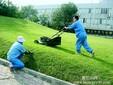 番禺绿化养护广州市砍树广州市挖树广州市修剪草坪