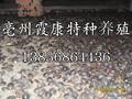 亳州土元养殖图片