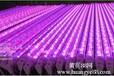 植物led灯管植物led生长灯促进植物快速生长-郎特公司
