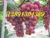 陕西大棚雨棚红提葡萄产地批发大量上市