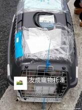 宠物回国带宠物回国免隔离宠物国际托运费用图片