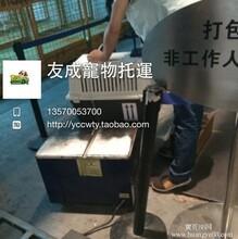 兔子托运回中国兔子托运多少钱宠物国际托运费用图片