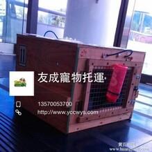 广州猫咪狗狗托运到香港澳门价格广州宠物到香港图片