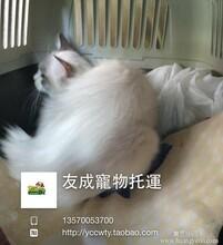 沈阳宠物托运沈阳宠物出国沈阳宠物回国免隔离图片