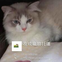 代办宠物航空火车托运检疫证明狗狗空运证件猫咪空运检疫证图片