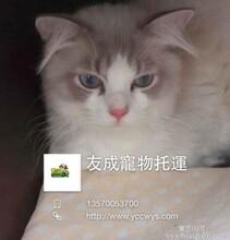 宠物到香港香港友成宠物托运公司狗狗到香港快捷当天到达香港托运图片