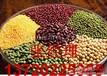 红福星张经理大量收购玉米小麦次粉